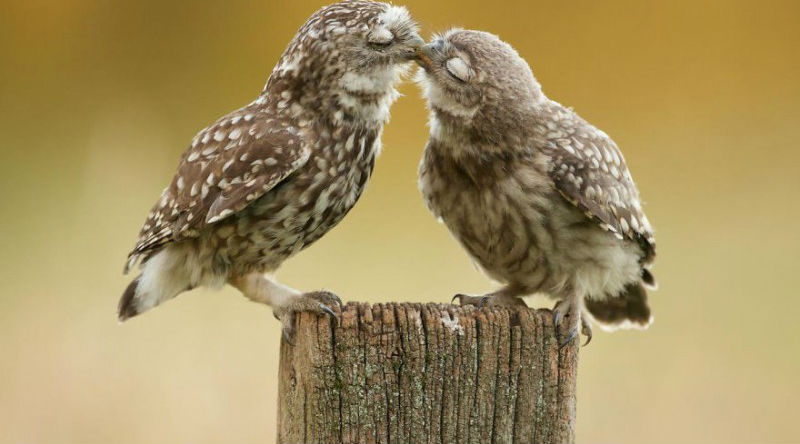Ну очень влюбленные животные