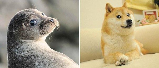 На самом деле тюлени — это о…