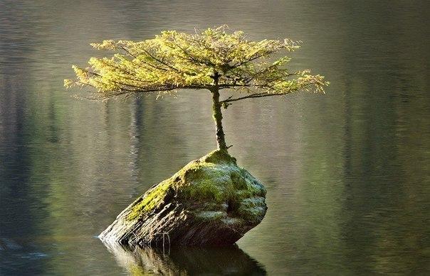 Уникальное явление: дерево, растущее из камня...