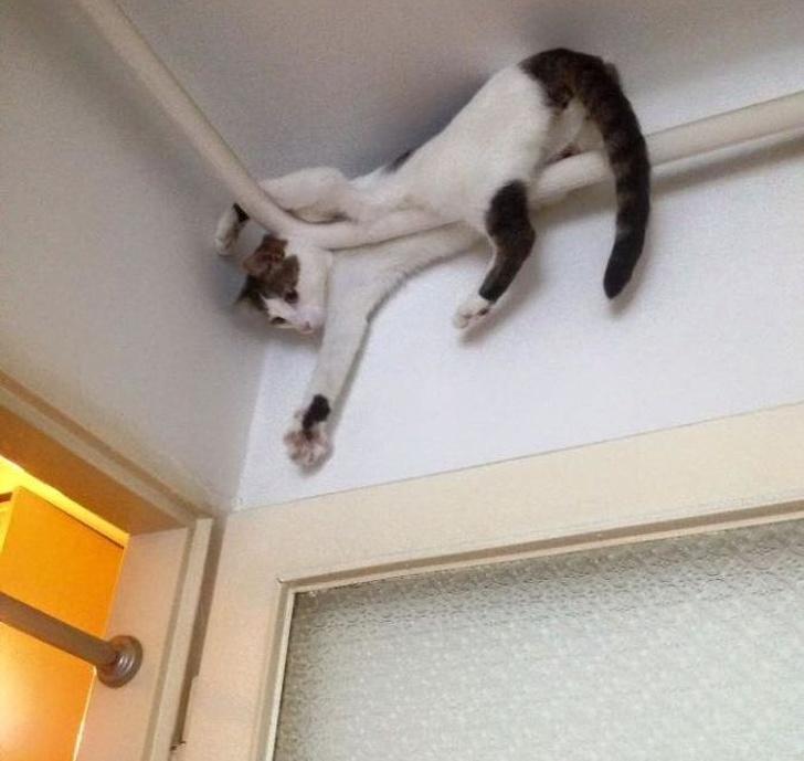 20 котов, у которых была все…