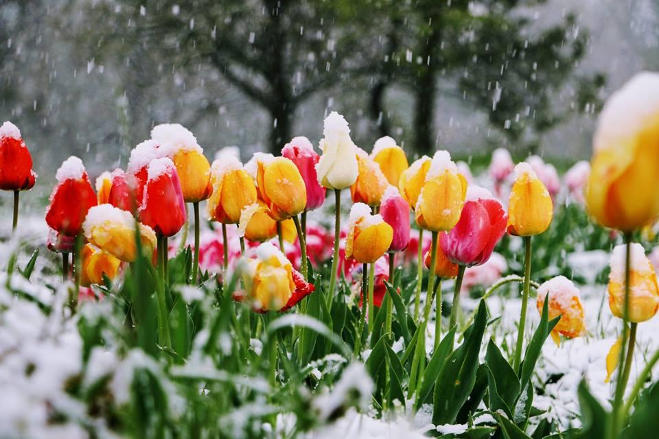 Нет, это не апрель с ума сошёл...Ирина Самарина-Лабиринт