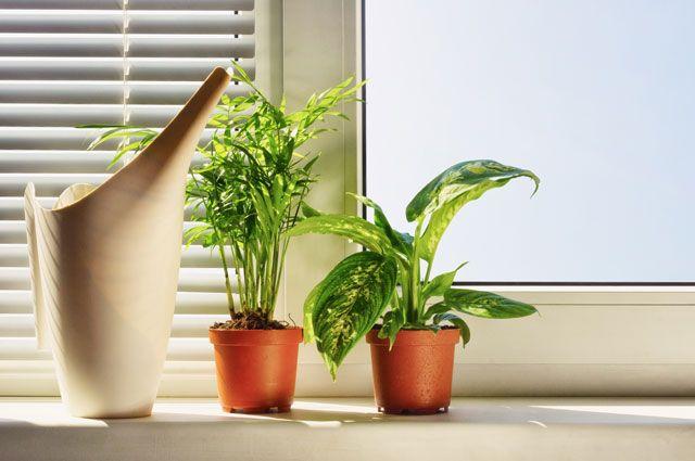 Отопительный сезон: правила ухода за комнатными растениями