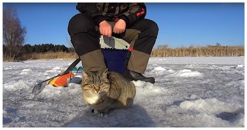 Голодной кошке повезло - наткнулась на щедрого рыбака. Смотрите, какая она теперь сытая-довольная!