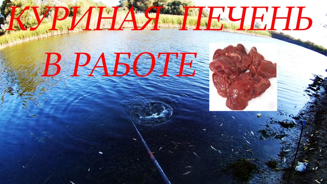 Рыбалка на куриную печень, такую рыбу я не ожидал поймать!