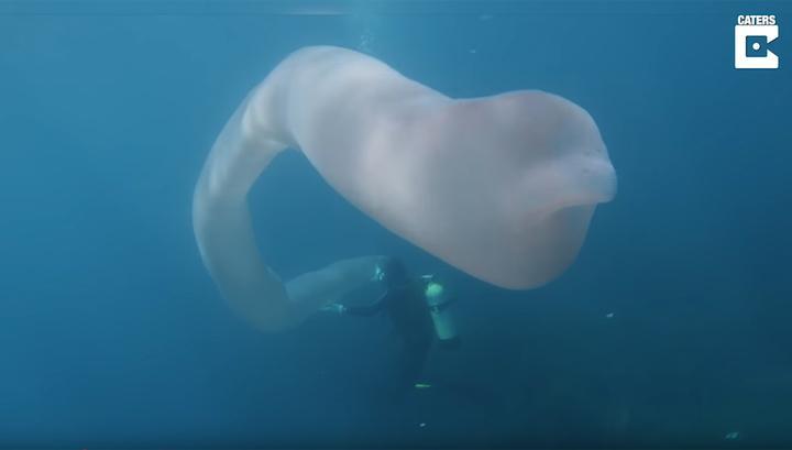 Невиданный морской монстр: о…