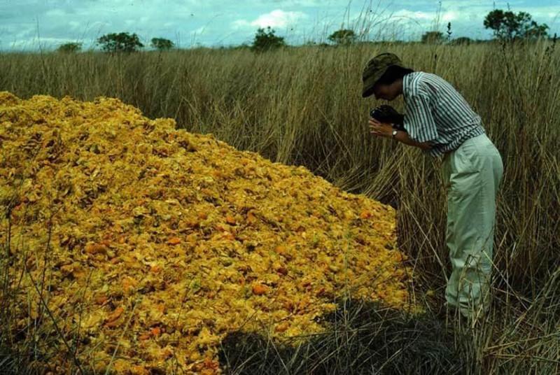 Апельсиновые корки, изменивш…