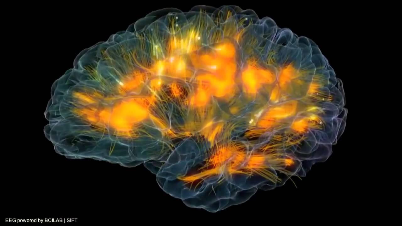 Факты о работе мозга, которые доказывают, что мы способны на все