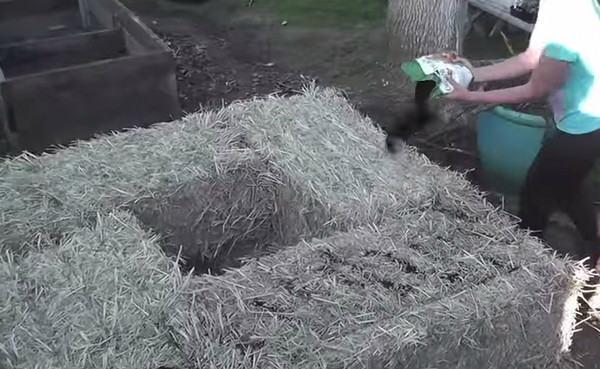 грядки из соломы для сада