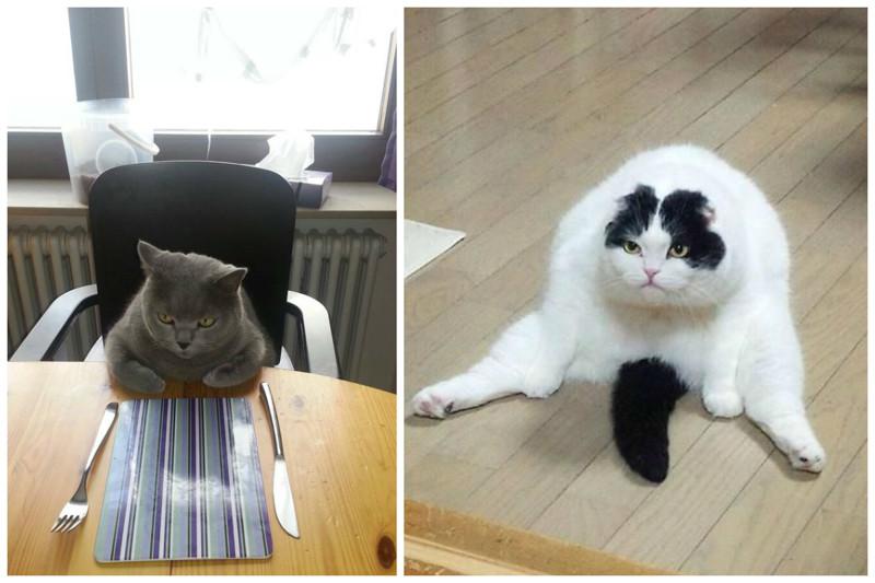 Сердиться, когда тебя не покормили или не дают отдыхать коты, милота, поведение, счастье, эмоции