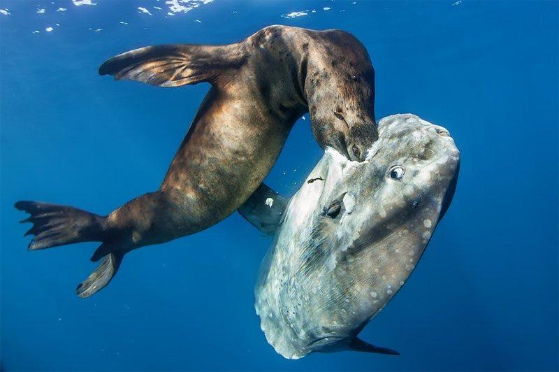 """""""Убийца гиганта"""", Ральф Пейс Wildlife Photographer of the Year, животные, конкурс, мир, под водой, природа, фотография, фотомир"""