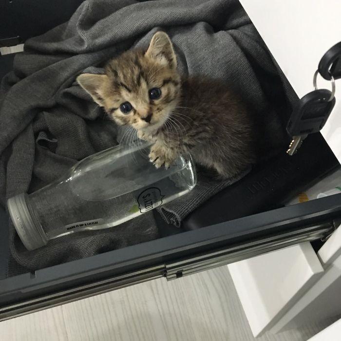 Котенок-сирота был найден в коробке недалеко от дома