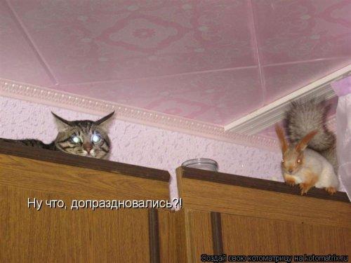 Свежая котоматрица на СБГ (38 фото)