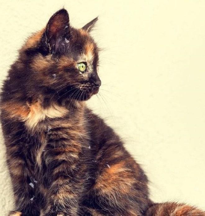 Аноним пожаловался на присутствие кошки в пожарной части, и малютке грозило оказаться на улице