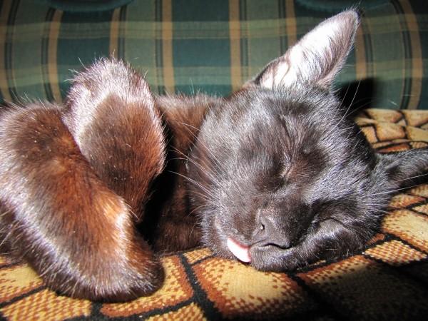 Тиша спит он устал