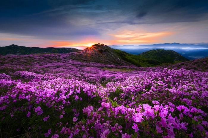 «Фестиваль весны»: замечательные пейзажи на снимках Чжэ Юн Рю