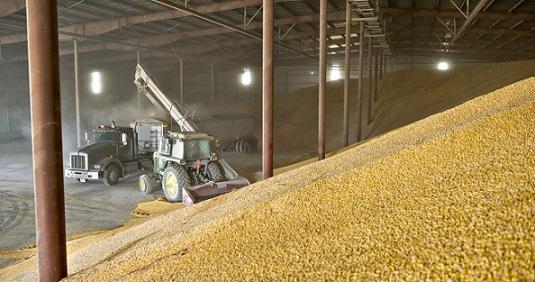 Изфедерального интервенционного фонда украли 19 тысяч тонн зерна