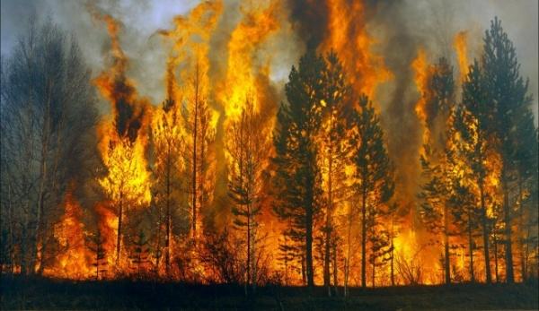 Больше чем в два раза выросла площадь пожаров в Бурятии за сутки