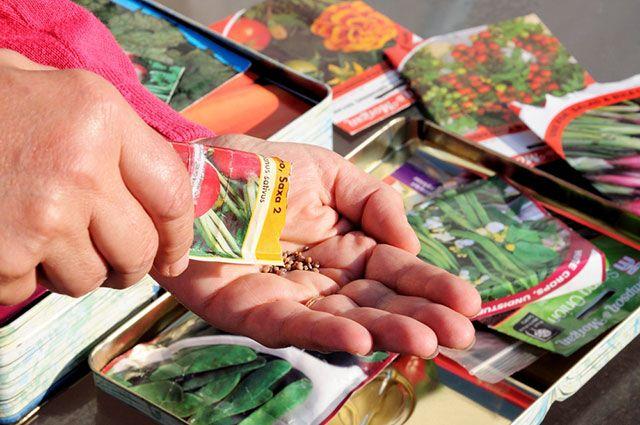 Семена овощей. Какие экземпляры заслуживают вашего внимания