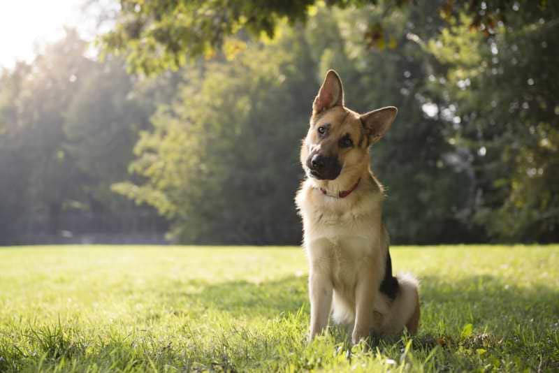 Причины, объясняющие многие интересные привычки вашей собаки