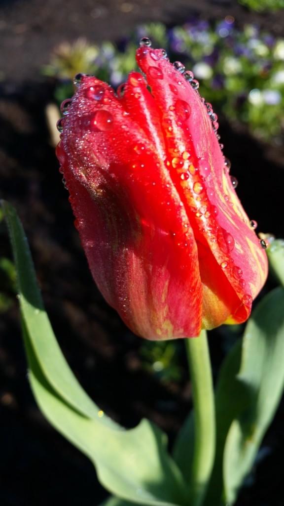 цветы 046
