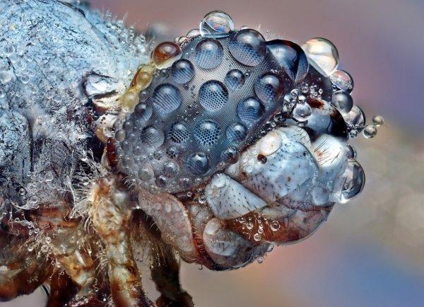 Макрофотографии насекомых от Ondrej Pakan (47 фото)
