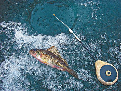 рыболов поймал 15 окуней ершей в 3 раза меньше запиши вопросы