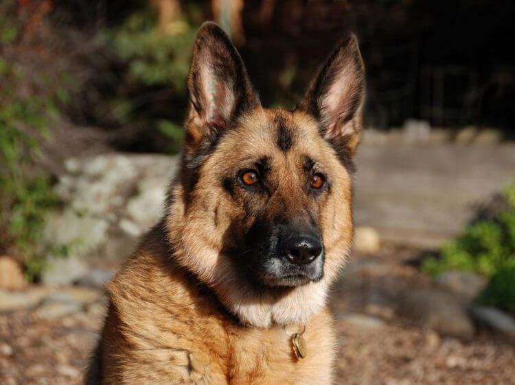 Пронзительная история о том, как старый пес спас в человеке — человека