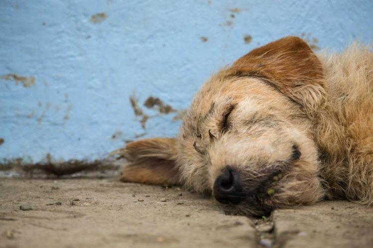 Пес преодолел 700 км экстремальной трассы по джунглям Эквадора, чтобы обрести хозяев