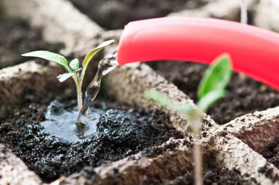 Стимуляторы, которые нужны рассаде