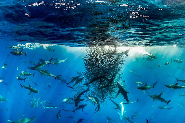 Победители конкурса фотографий дикой природы BigPicture Natural World Photography Competition