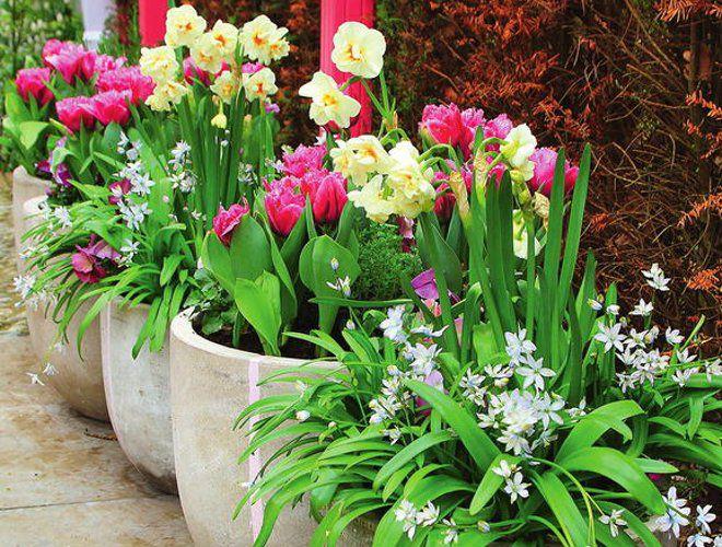 кашпо для цветов луковичные