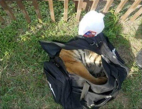 «Из спортивной сумки торчала лапа!» Мексиканцы бросили странный груз и убежали…