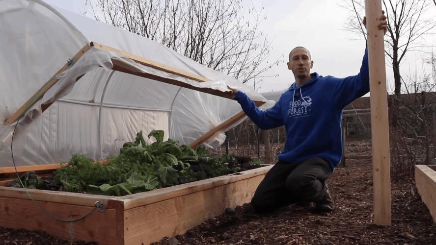 Приподнятая грядка с парником: рациональное решение для получения раннего урожая