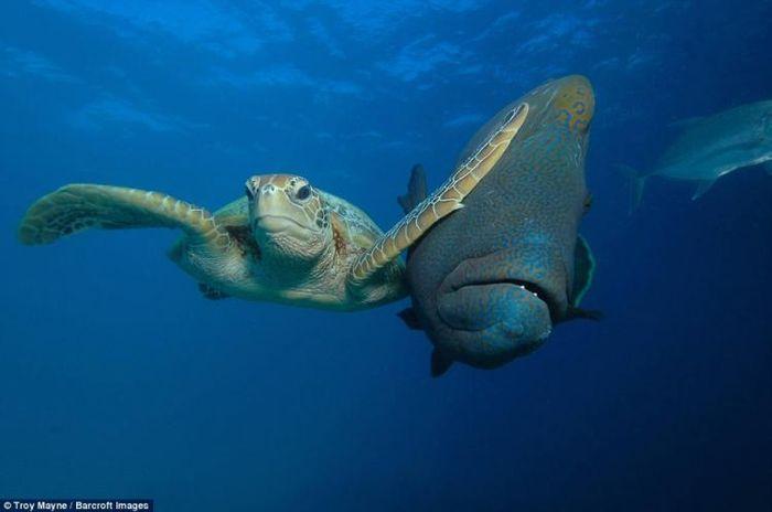 12 самых смешных и нелепых фото дикой природы за 2017 год!