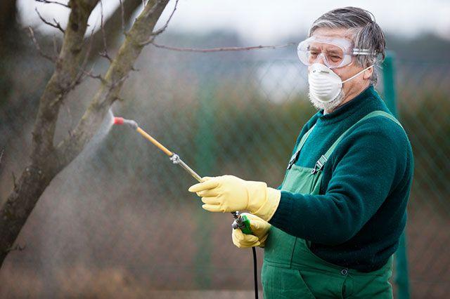 Осенний «медосмотр»… или как проводить дезинфекцию плодовых деревьев?