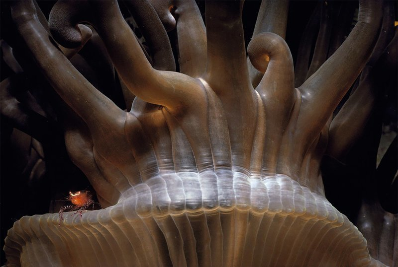 """""""Изысканный и великолепный"""", Джефф Ротман Wildlife Photographer of the Year, животные, конкурс, мир, под водой, природа, фотография, фотомир"""