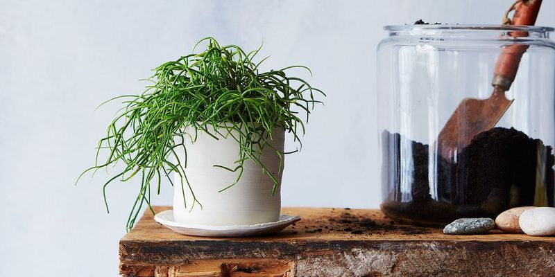 Янтарная кислота для растений