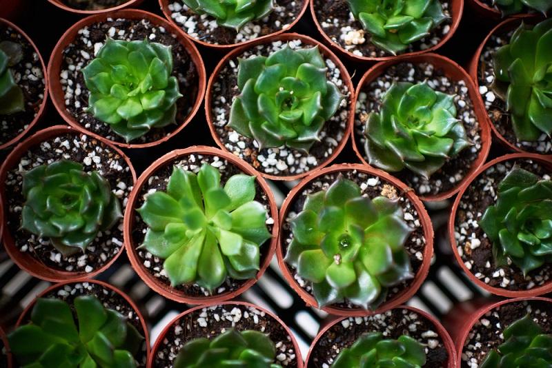 Какие растения нельзя держать в квартире