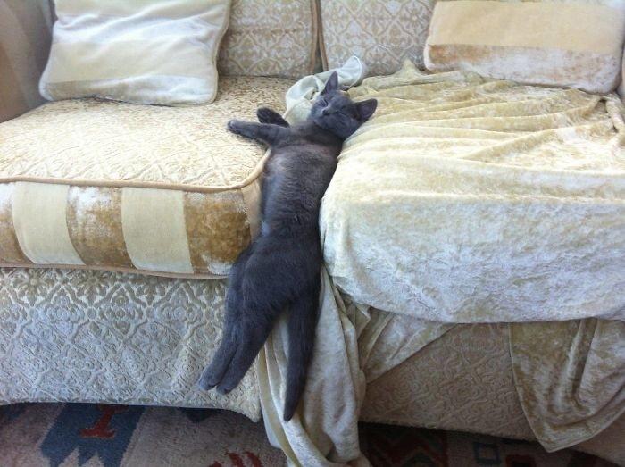 Ммм, как удобно кошки, приколы, прикольные фото животных, смешные кошки
