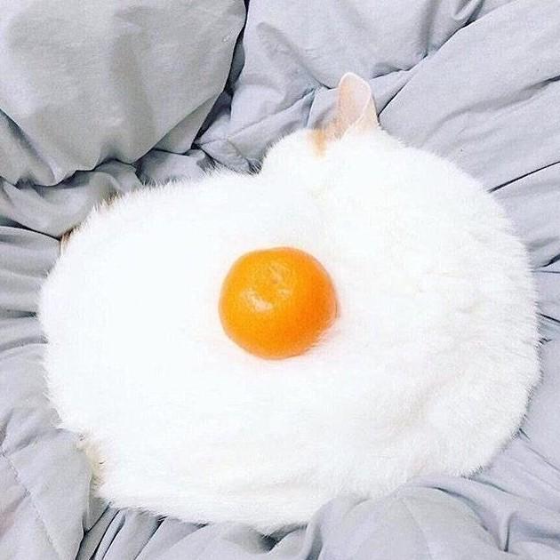 Кот - яичница глюк, иллюзии, обман зрения, смешно, удачный кадр, это не то чем кажется, юмор
