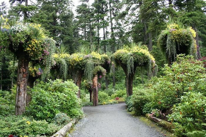 Вверх тормашками: необычные деревья-клумбы в ботаническом саду Glacier Gardens на Аляске