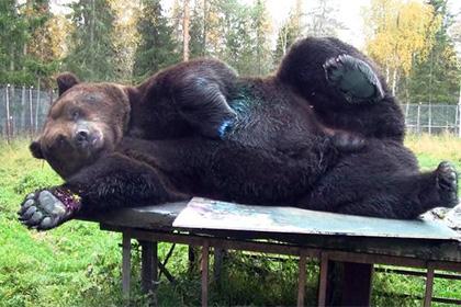 В Финляндии открылась выставка нарисованных медведем картин