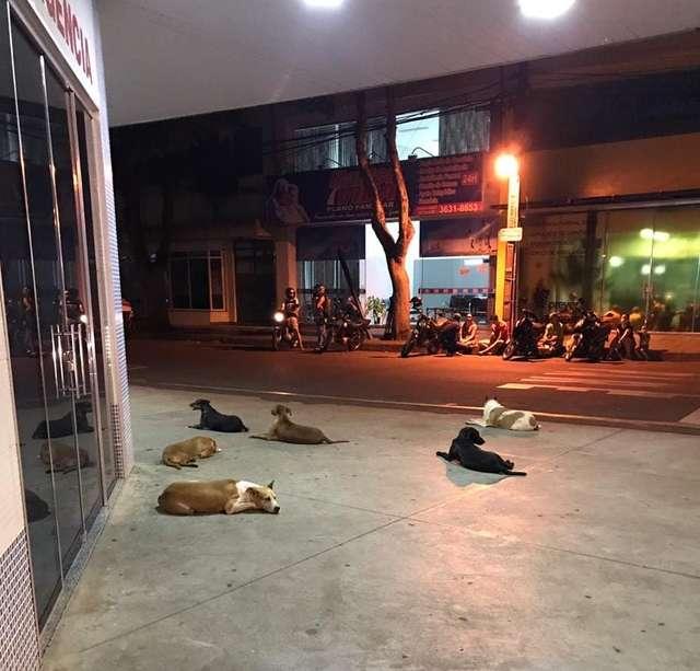 Шестеро собак, задыхаясь, бежали за машиной скорой помощи. Она увозила их хозяина