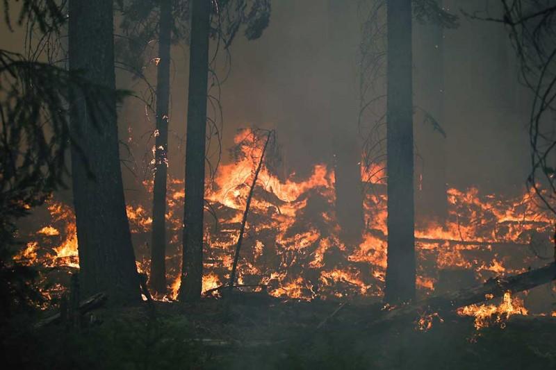Около 100 тыс. га лесных земель горит в России