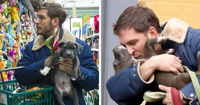 Том Харди с собаками — одна из самых милых вещей, что вы увидите сегодня