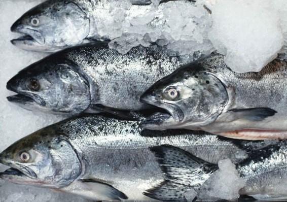 Беларусь в 15 раз нарастила поставки мороженой рыбы на российский рынок