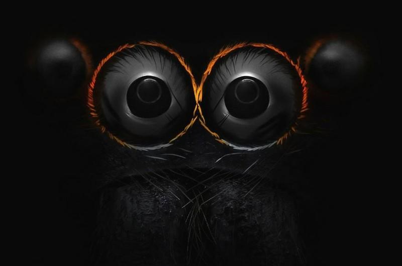 2. Глаза паука-скакуна nikon, конкурс, красота, фото