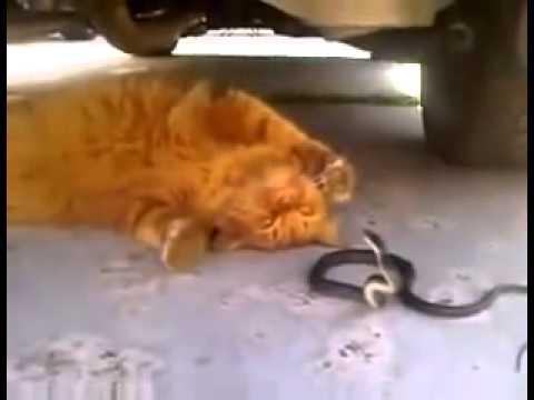 Кот и змея, опасные игры.