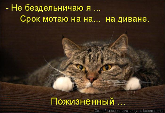 Забавные и прикольные котома…