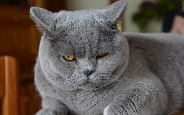 Кот Тимоша не любит оставаться один дома и по этому решил не пускать хозяйку на работу (видео)